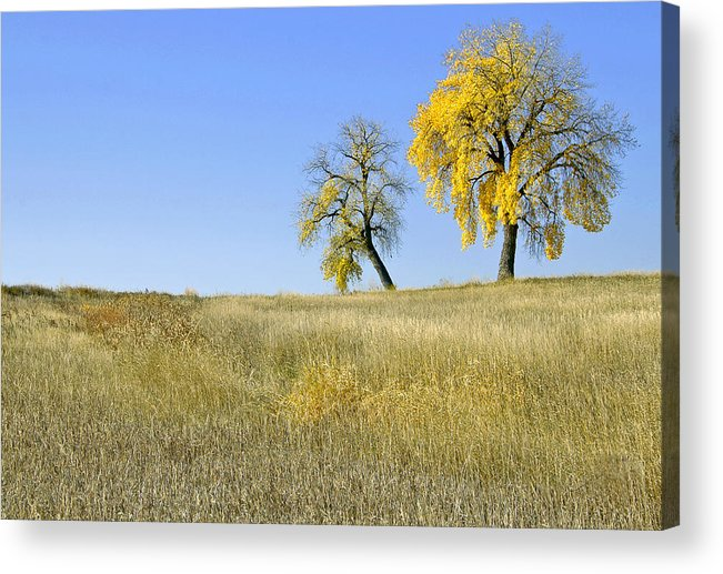 Fall. Blue. Sky. Weeds. Yellow. Grass. Fields. Water. Rain. Clouds.fall Colors Photography. Mixed Media. Mixed Media Photography. Mixed Media Fall Colors. Fine Art Fall Colors. Colorado Fall Colors. Fall Greeting Cards. Yellow Fall Color Photography. Fall Colors In Fort Collins Co. Gallery Fine Art Photography. Fall Landscape Photography. Acrylic Print featuring the photograph Fall Days In Fort Collins Co by James Steele