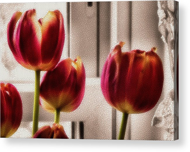 Flowers Acrylic Print featuring the photograph Home by Karen Scovill