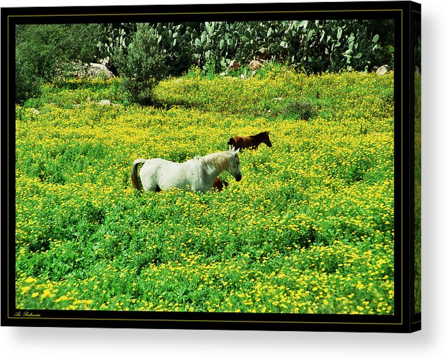 Horses Acrylic Print featuring the photograph Horses by Arik Baltinester