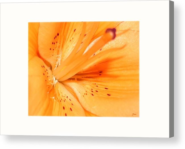 Flower Acrylic Print featuring the photograph La Flower by Ruben Flanagan