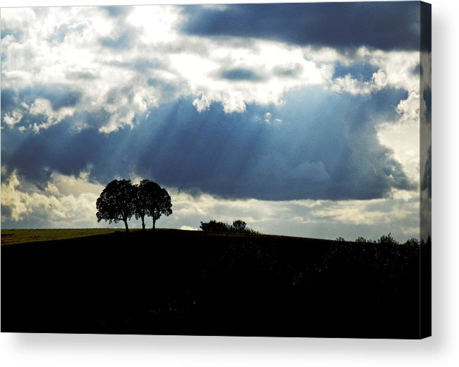 Trees Acrylic Print featuring the photograph Light Rays by Margaret Hood