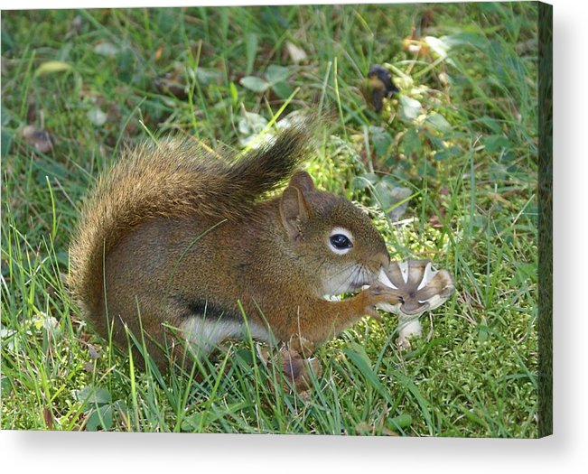 Chipmunk Acrylic Print featuring the photograph Lunch Time by Lisa Hebert