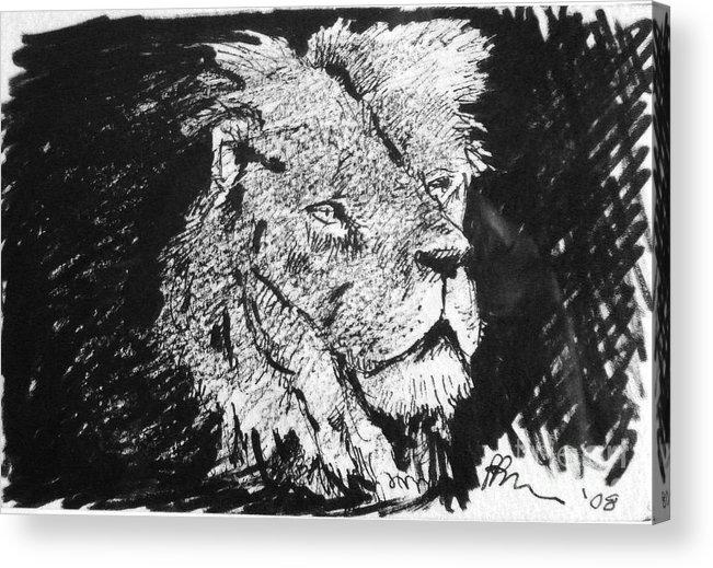 Male Lion Portrait Acrylic Print featuring the drawing Male Lion Portrait by Paul Miller
