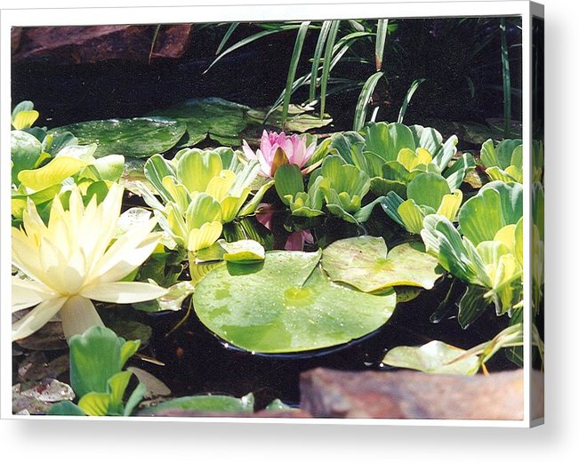 Waterlillies Acrylic Print featuring the photograph Morning Pond by Laura Johnson