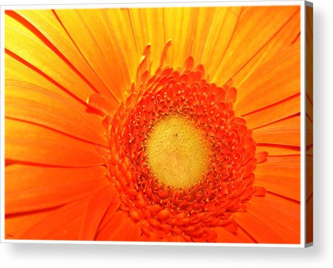 Flower Acrylic Print featuring the photograph Orange Flower by Ruben Flanagan