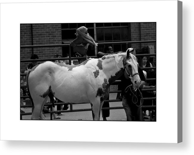 Horse Acrylic Print featuring the photograph Painted Horse by Filipe N Marques