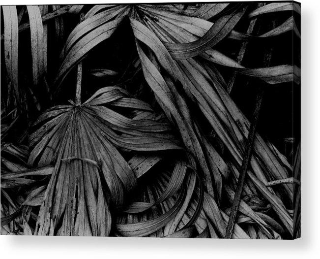 Florida Landscape Acrylic Print featuring the photograph Palms by Michael L Kimble