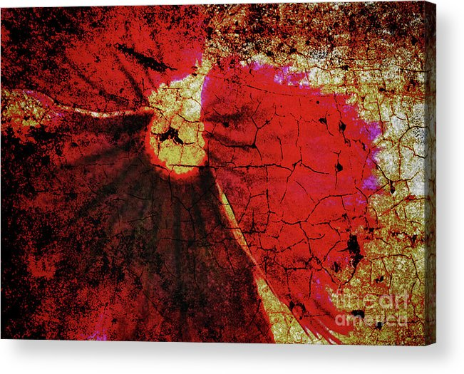 Flower Acrylic Print featuring the photograph Pansy by Elaine Manley