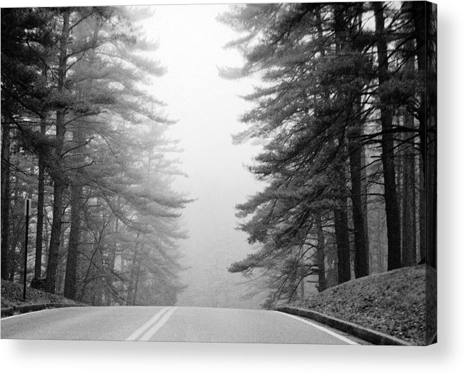 Pines Acrylic Print featuring the photograph Pine Mist by Paul Trunk