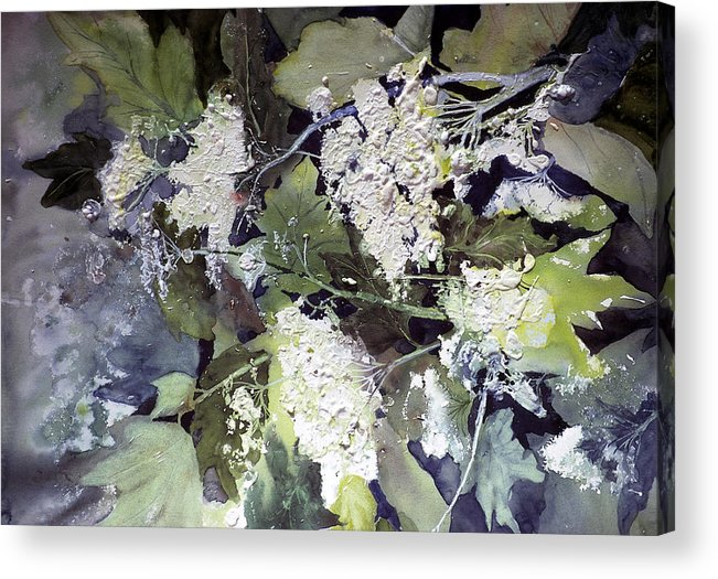 Queen Annes Lace Acrylic Print featuring the painting Queen Anne's Lace by Connie Williams