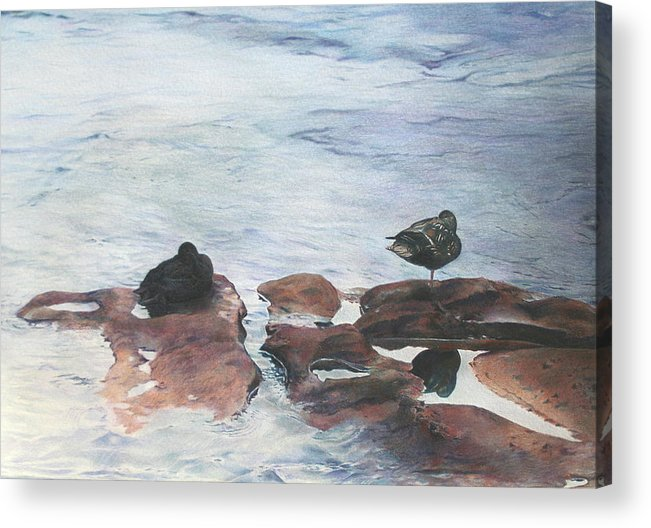 Ducks Acrylic Print featuring the painting Riffles by Catherine Henry