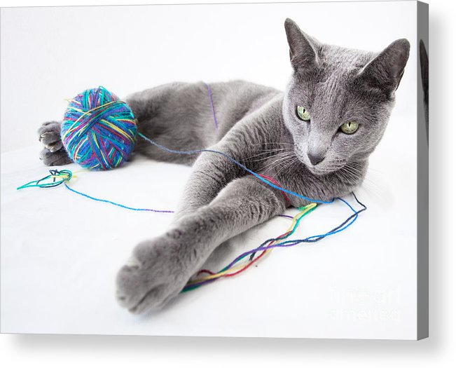 Russian Acrylic Print featuring the photograph Russian Blue by Nailia Schwarz