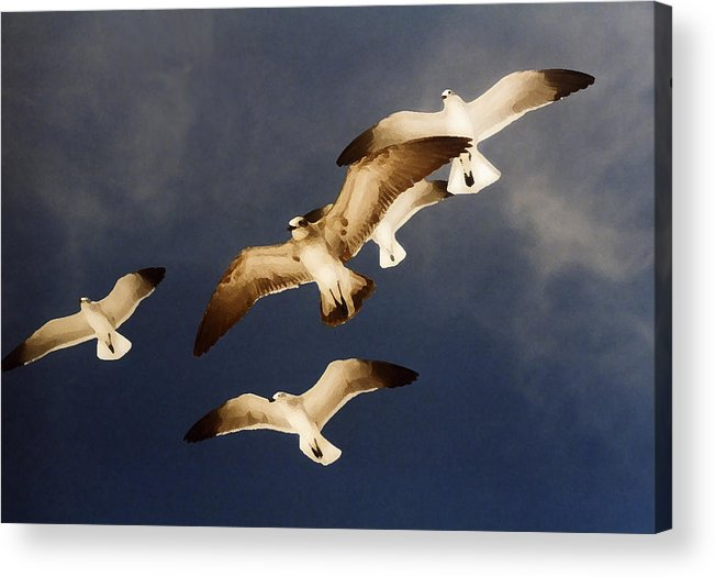 Seagulls Acrylic Print featuring the digital art Soar by Ginger Howland