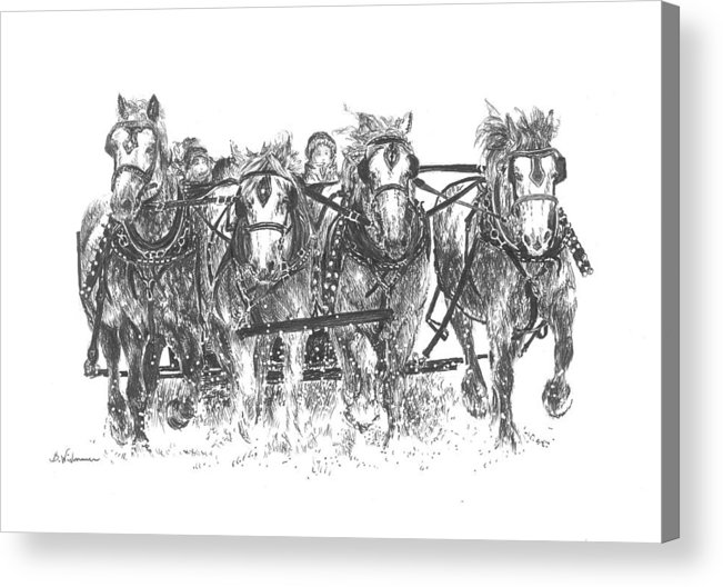 Solstice Acrylic Print featuring the drawing Solstice Celebration by Barbara Widmann