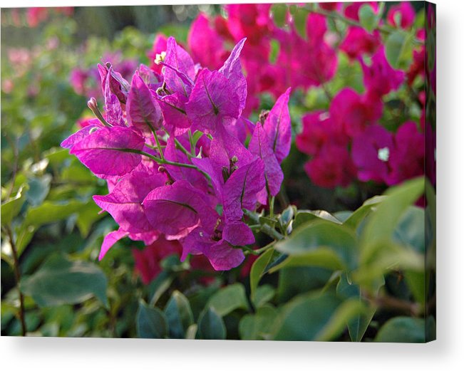 St Lucia Floral Acrylic Print featuring the photograph St Lucia Floral by J R Baldini