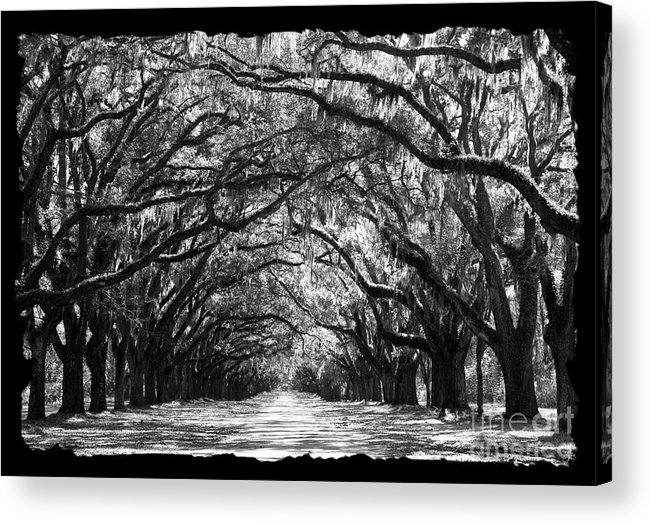 Live Oaks Acrylic Print featuring the photograph Sunny Southern Day - Black And White With Black Border by Carol Groenen