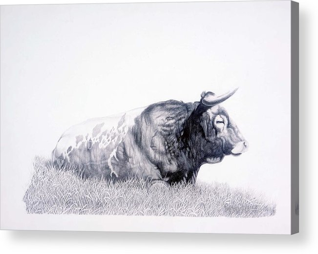 Longhorn Acrylic Print featuring the drawing The Herdmaster by Howard Dubois
