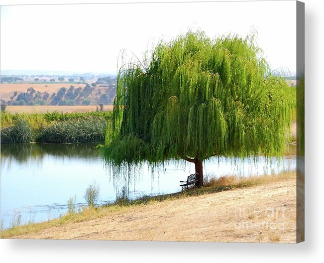 Tree Acrylic Print featuring the photograph The Tree That Wept by Lori Leigh