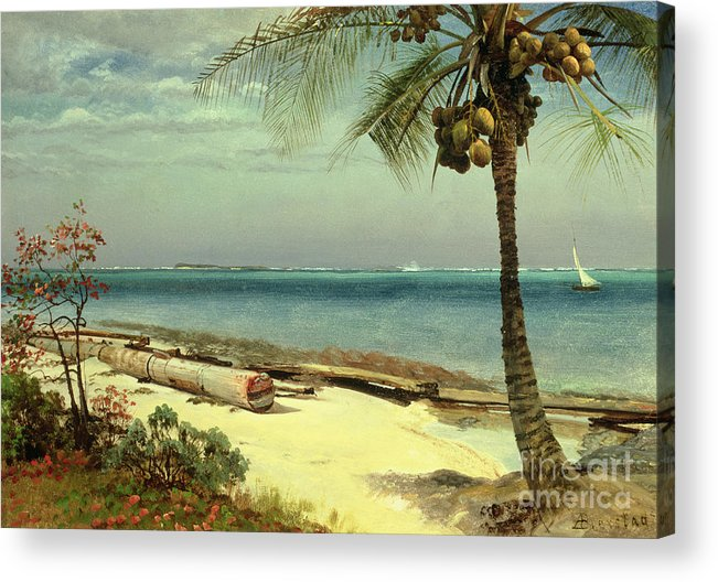 Shore; Exotic; Palm Tree; Coconut; Sand; Beach; Sailing Acrylic Print featuring the painting Tropical Coast by Albert Bierstadt
