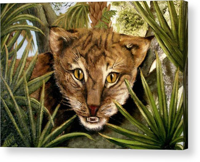 Bobcat Acrylic Print featuring the painting Watching Floridabobcat by Darlene Green