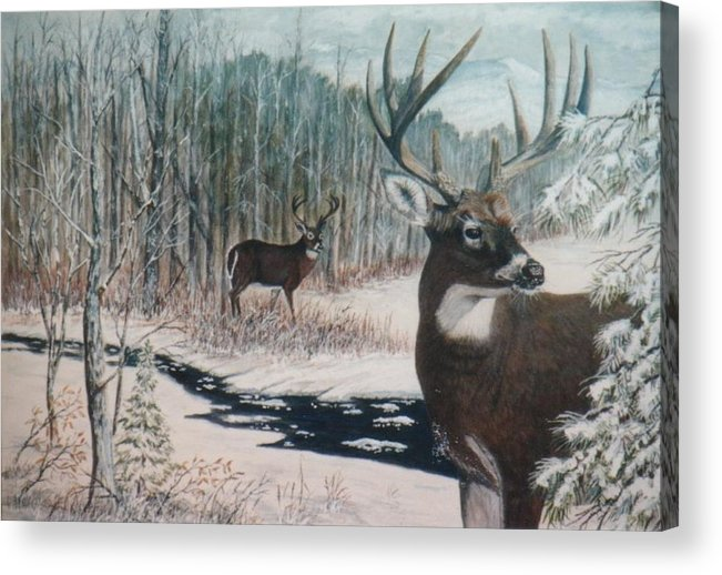 Deer; Snow; Creek Acrylic Print featuring the painting Whitetail Deer by Ben Kiger