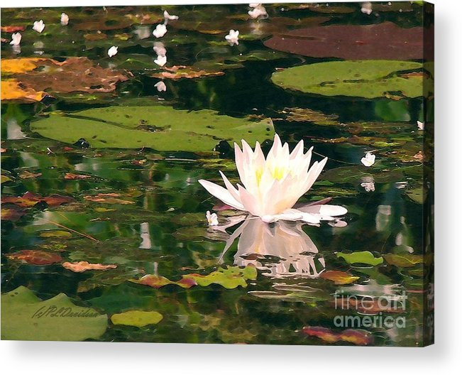 Water Lilly Acrylic Print featuring the photograph Wild Water Lilly by Patricia L Davidson