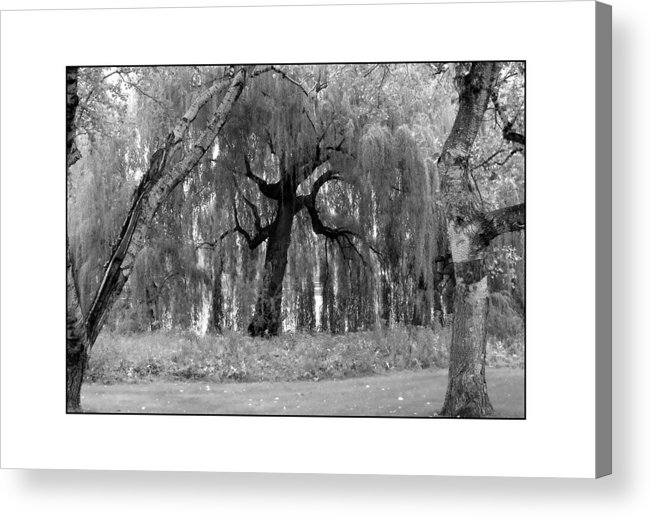 Willow Acrylic Print featuring the photograph Willows by Filipe N Marques
