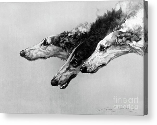 British Acrylic Print featuring the drawing The Borzois, Black And White Sketch, 3 Russian Wolfhounds by Thomas Pollart