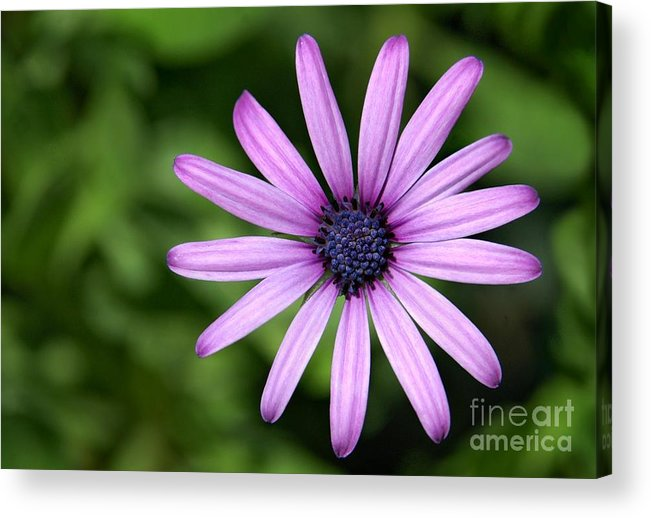 Flower Acrylic Print featuring the photograph In The Garden by Dan Holm