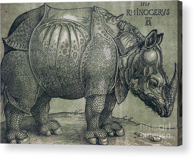 Woodprint; Rhino; Northern Renaissance; Wild; Animal; Mammal; Horn; Endangered Species; Print; Zoology Acrylic Print featuring the drawing The Rhinoceros by Albrecht Durer