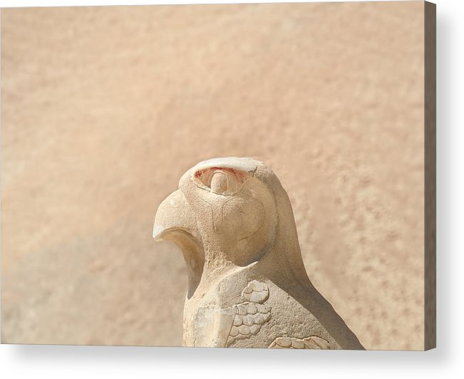 Egypt Acrylic Print featuring the photograph Bird Of Prey.. by A Rey