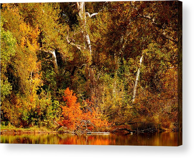 Creekside Fall Color Colors Leaves Trees One Mile Bidwell Park Chico Ca Acrylic Print featuring the photograph Fall Color Creekside by Holly Blunkall