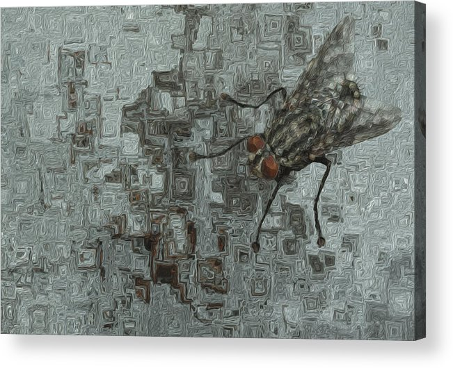 Abstract Acrylic Print featuring the painting Fly On The Wall by Jack Zulli
