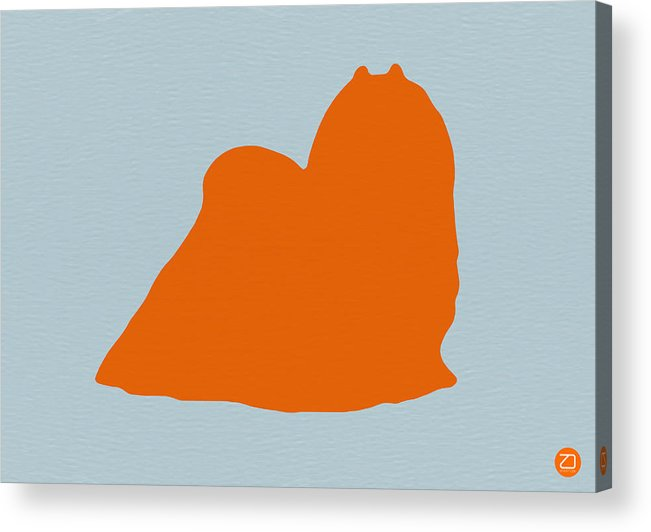 Maltese Acrylic Print featuring the photograph Maltese Orange by Naxart Studio
