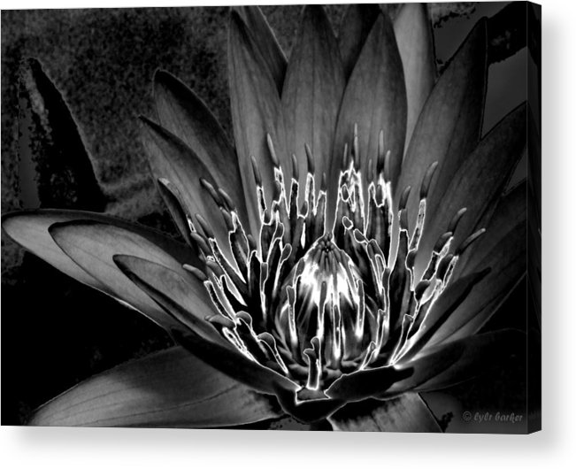 Lotus Acrylic Print featuring the photograph Metal Lotus by Lyle Barker