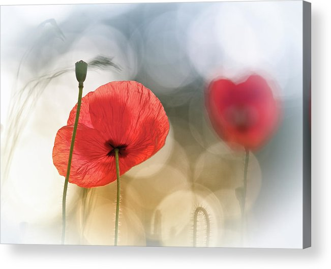 Flowers Acrylic Print featuring the photograph Morning Poppies by Steve Moore