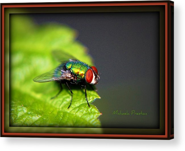Nature Acrylic Print featuring the photograph Ready..go by Michaela Preston