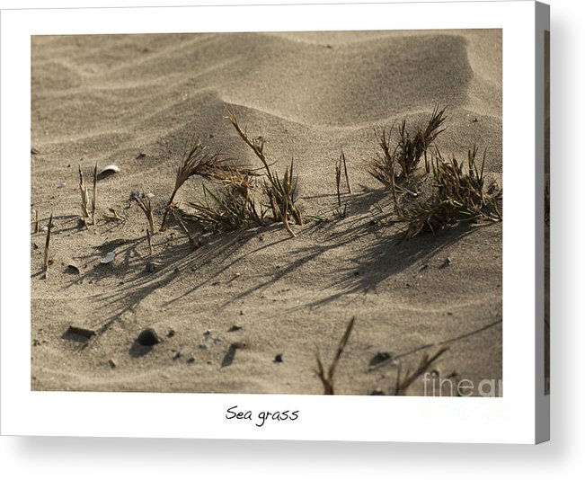 Sea Grass In The Sand Acrylic Print featuring the photograph Sea Grass by Artist and Photographer Laura Wrede