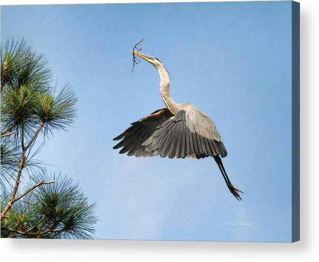 Blue Heron Acrylic Print featuring the photograph Up To The Nest by Deborah Benoit