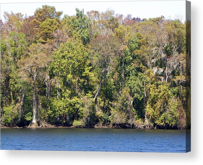 Suwannee Acrylic Print featuring the photograph Fall On The Suwannee River by Sheri McLeroy