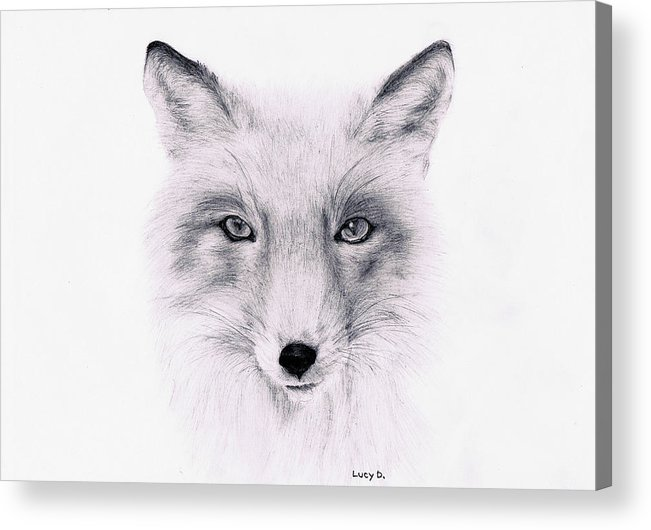 Fox Acrylic Print featuring the drawing Fox by Lucy D