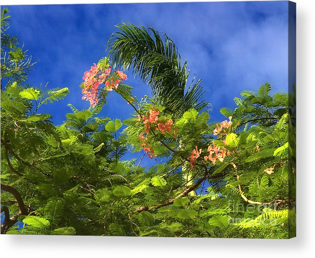 Bermuda Days Acrylic Print featuring the photograph Nassau Days by H Scott Cushing