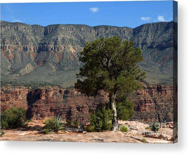 Trees Acrylic Print featuring the photograph On The Edge by Vivian Christopher