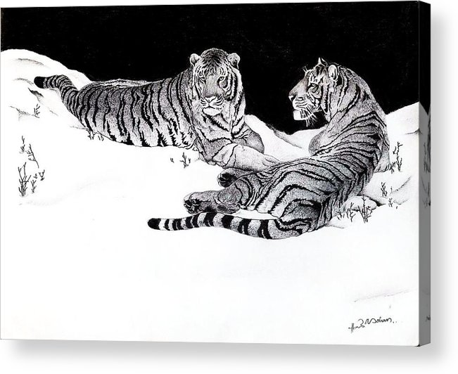 Tigers Acrylic Print featuring the drawing Tigers In The Snow by Hari Mohan