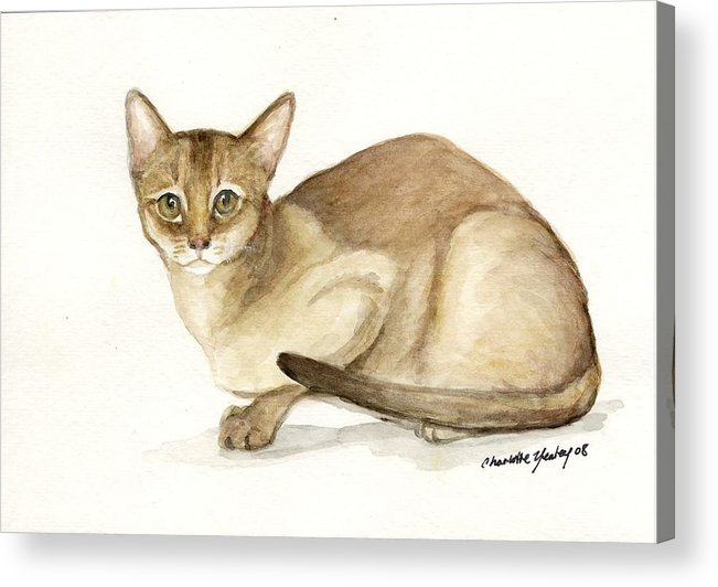 Cat Acrylic Print featuring the painting Absyssinian Cat by Charlotte Yealey