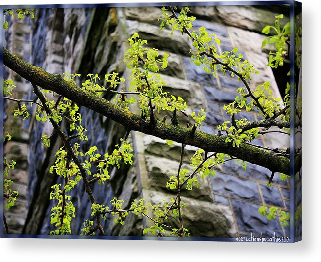 Nature Acrylic Print featuring the photograph Beginnings Of Spring by Cathie Tyler