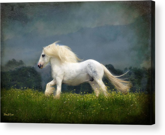 Horses Acrylic Print featuring the photograph Blue Billy C1 by Fran J Scott