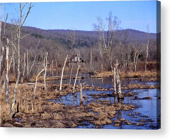 Acrylic Print featuring the photograph Boxely Swamp2 by Curtis J Neeley Jr