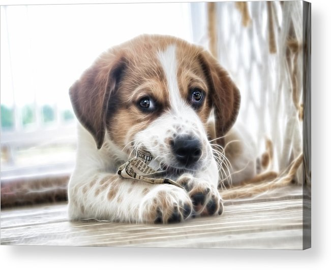 Puppy Acrylic Print featuring the photograph Chewing The News by Tilly Williams