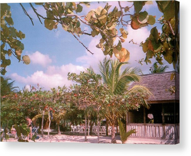 Jamaica Acrylic Print featuring the photograph Cosmos At Negril by Debbie Levene